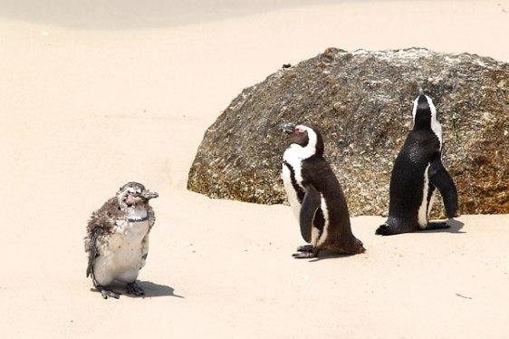 pingviner_5